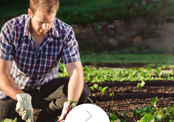 Mantencion de jardines y areas verdes.
